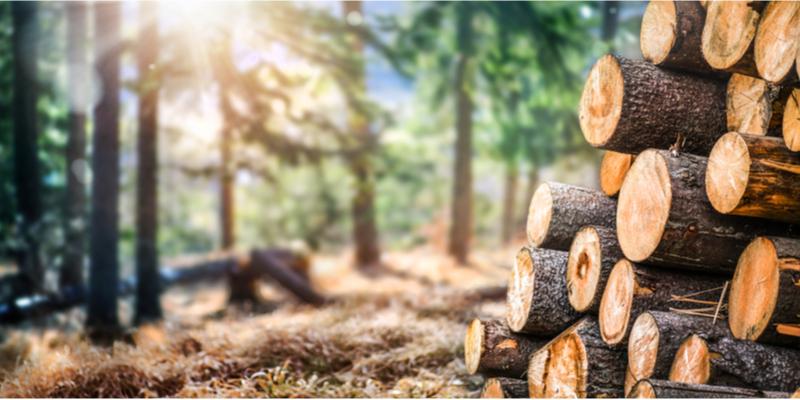 Chemische methodes voor herkomst tracering van hout