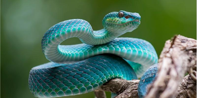 Listig slangengif wordt ontrafeld middels eiwitkarakterisatie