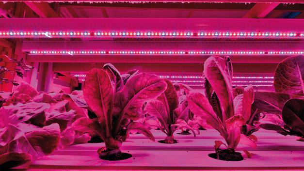 LED-verlichting meer en meer aanwezig in de horticulture