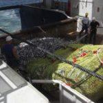 Nieuw. Op volle zee batches vis nauwkeurig doseren.