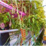 Definitieve doorbraak LED verlichting in Horticulture