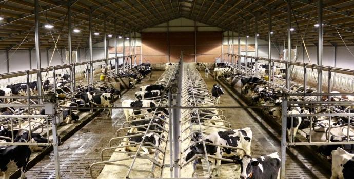 Hoe een LED-armatuur koe, kip en boer blij maakt