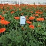 Klimaatmonitoring in glastuinbouw